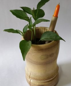 Plantable Seed Pens - Box of 8 - Planted in a pot