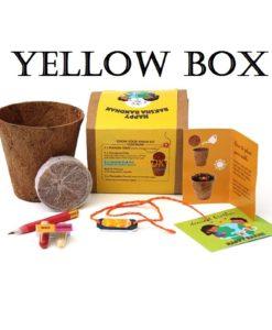 yellow box with sun rakhi