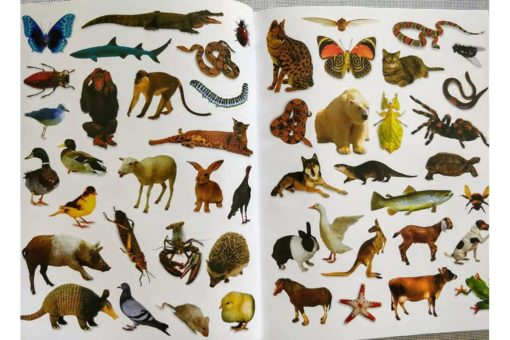 My Big Book of Stickers - inside5