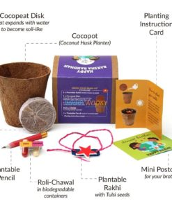 Plantable Rakhi with Seeds for Kids - Star Shape Purple Box contents