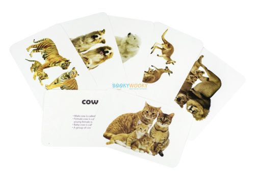 Animals & Their Babies Flashcards (2)