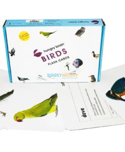Birds Flashcards (1)