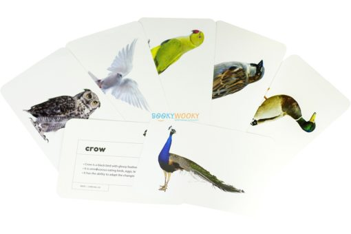 Birds Flashcards (2)