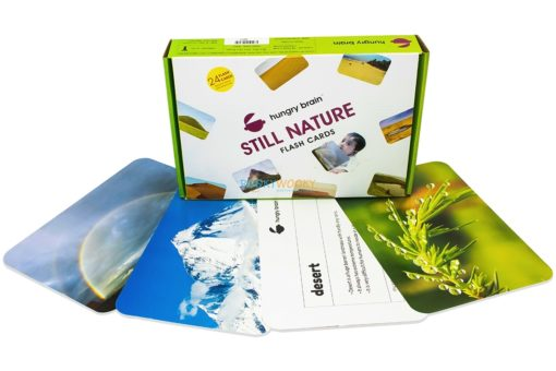Still Nature Flashcards (1)