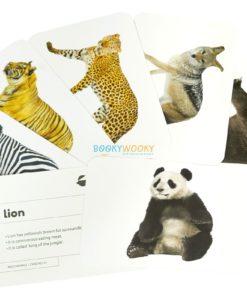 Wild Animals Flashcards (2)