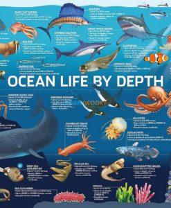 500 Piece Jigsaw Puzzle Ocean Life
