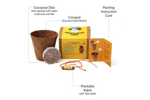 Plantable Seed Rakhi with Planter Pot for Adults