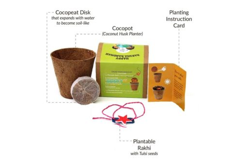 Plantable Seed Rakhi with Planter Pot for Kids