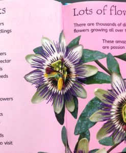 How-Flowers-Grow-Usborne-Beginners-9780746074503-inside-2.jpg