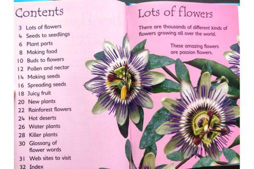 How-Flowers-Grow-Usborne-Beginners-9780746074503-inside-2.jpg