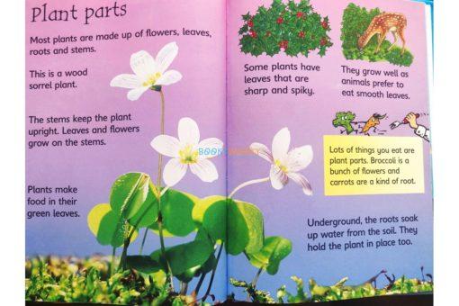 How-Flowers-Grow-Usborne-Beginners-9780746074503-inside-3.jpg