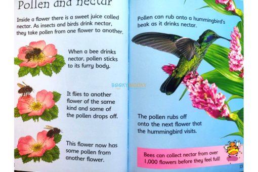How-Flowers-Grow-Usborne-Beginners-9780746074503-inside-4.jpg