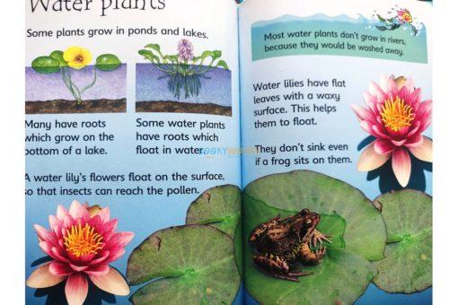 How-Flowers-Grow-Usborne-Beginners-9780746074503-inside-5.jpg