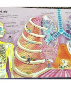See Inside your body Usborne 50 flaps inside2