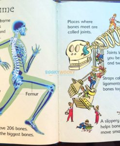 Your-Body-Usborne-Beginners-9780746074800-inside-4.jpg
