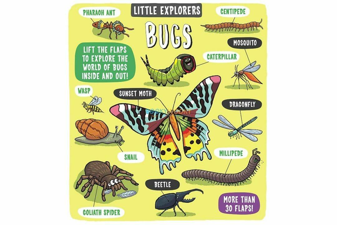 Little Explorers Bugs