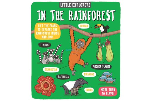 Little Explorers In The Rainforest