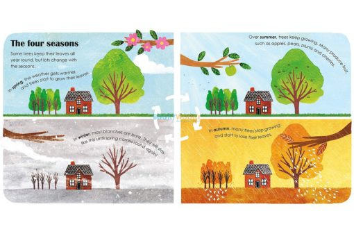 Trees A Lift-The-Flap Eco Book