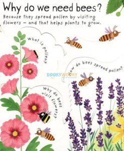 Why Do We Need Bees (Lift-the-Flap First Questions and Answers)